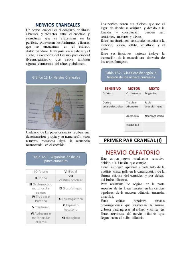 NERVIOS CRANEALES Un nervio craneal es el conjunto de fibras aferentes y eferentes entre el encéfalo y estructuras que se ...