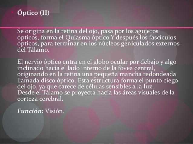 • Óptico (II) Se origina en la retina del ojo, pasa por los agujeros ópticos, forma el Quiasma óptico Y después los fascíc...