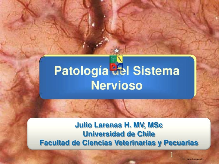 Patología del Sistema Nervioso<br />Dr. Julio Larenas H.<br />Julio Larenas H. MV, MSc<br />Universidad de Chile <br />Fac...