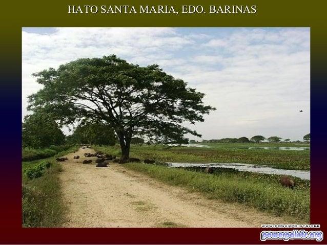 HATO SANTA MARIA, EDO. BARINAS