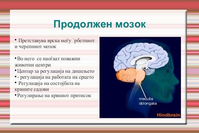 Продолжен мозок  Претставува врска меѓу `рбетниот и черепниот мозок  Во него се наоѓаат поважни животни центри  Центар ...