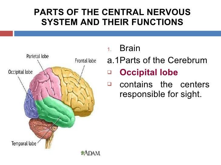 CNS (Central Nervous System)