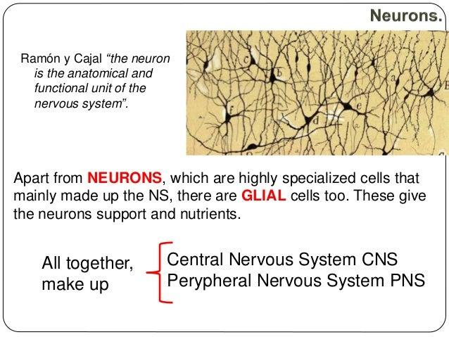 nervous endocrine system essay Body's electrical wiring, hormones, glands - nervous system and endocrine system.