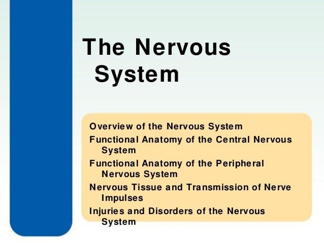 The Nervous System Overview of the Nervous System Functional Anatomy of the Central Nervous System Functional Anatomy of t...