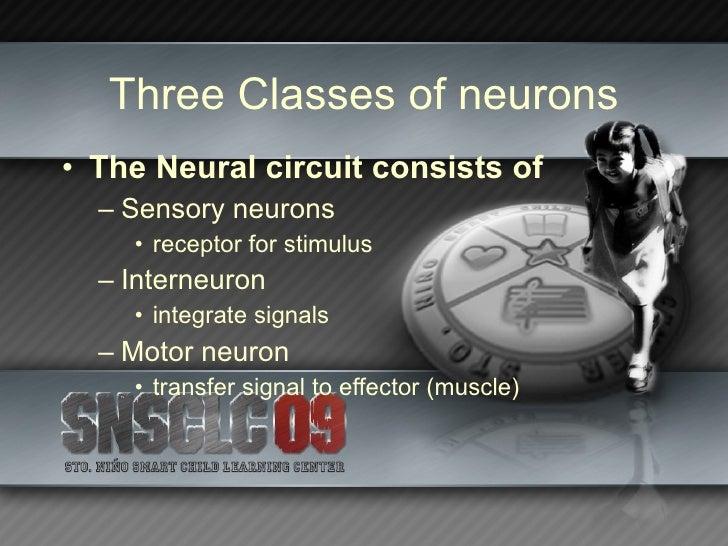Nervous System Slide 3