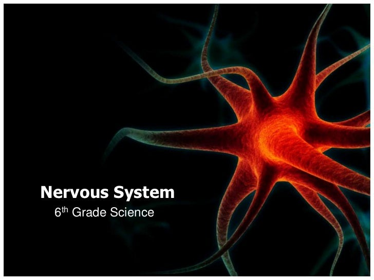 Nervous system nervous systembr 6th grade toneelgroepblik Image collections