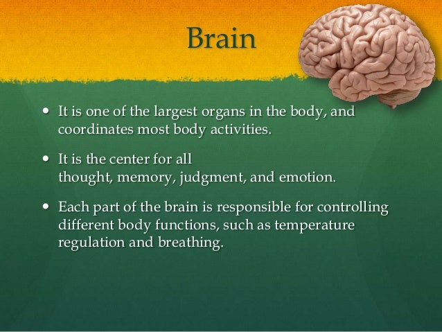 Brain It is one of the largest organs in the body, and  coordinates most body activities. It is the center for all  thou...