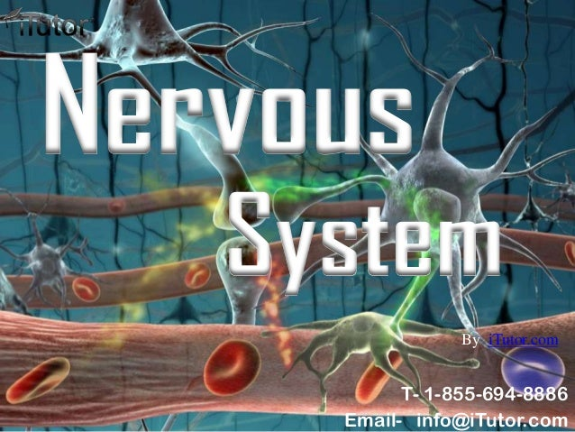 SystemNervousT- 1-855-694-8886Email- info@iTutor.comBy iTutor.com