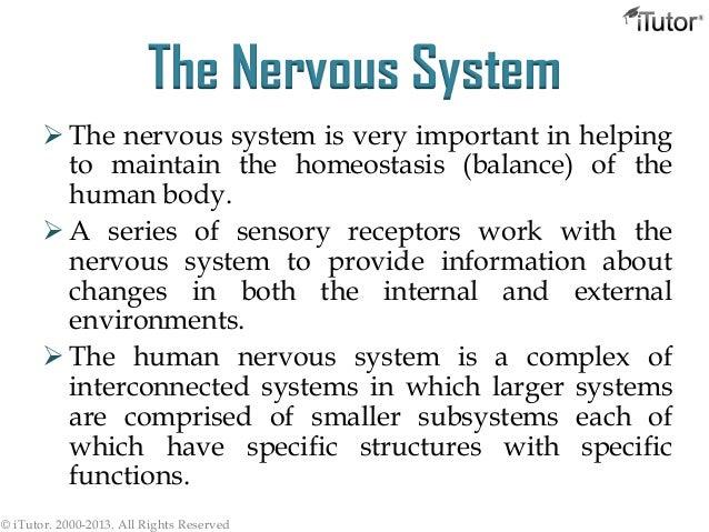 Nervous System Slide 2