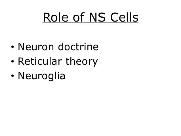 nervous system yocum 2014