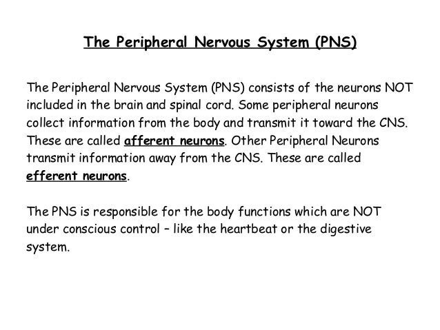 Nervous system 9 the peripheral nervous system ccuart Choice Image