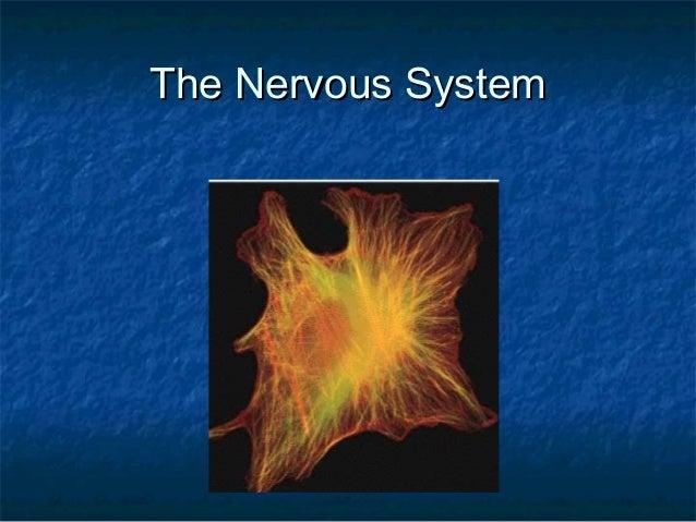 The Nervous SystemThe Nervous System