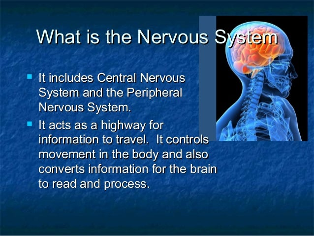The Nervous system Slide 2