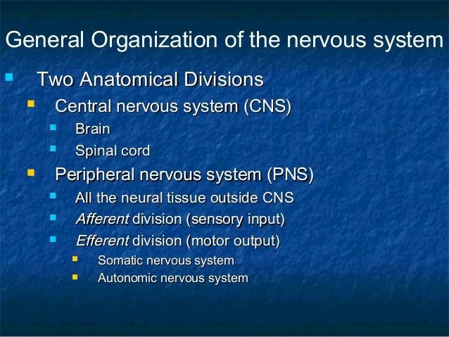 The Nervous system Slide 3