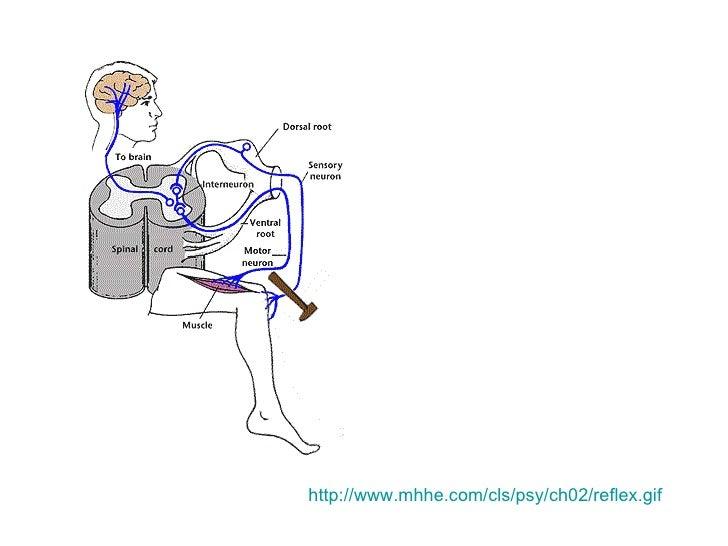 nervous system concepts overview v12