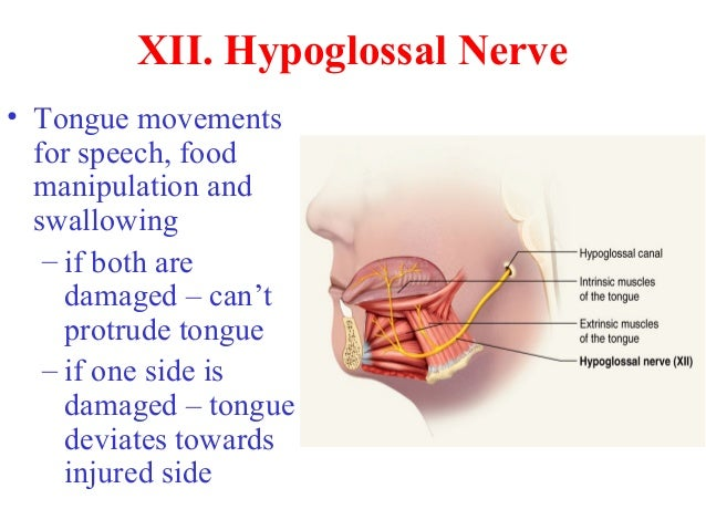 Can Food Increase Nerve Pain