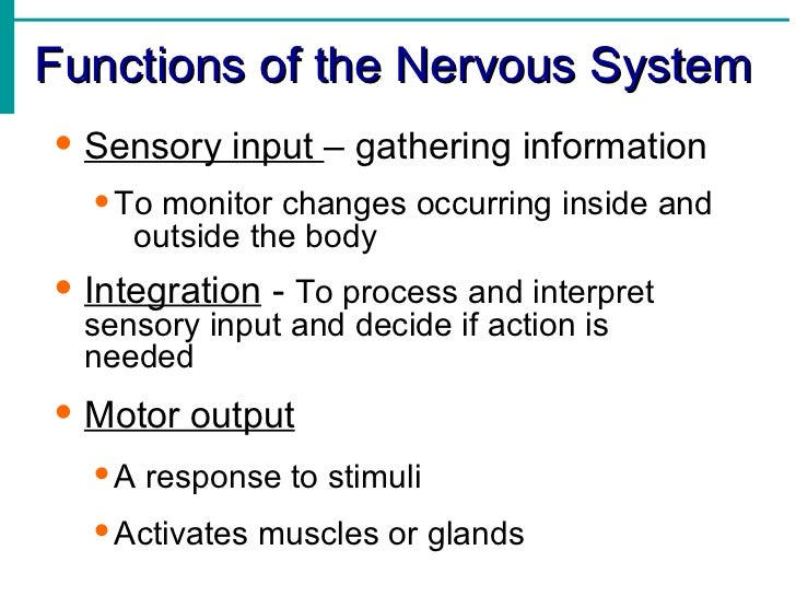 the role of the nervous system in behaviour