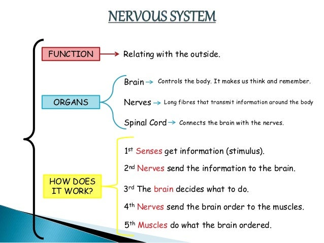 outline of the nervous system