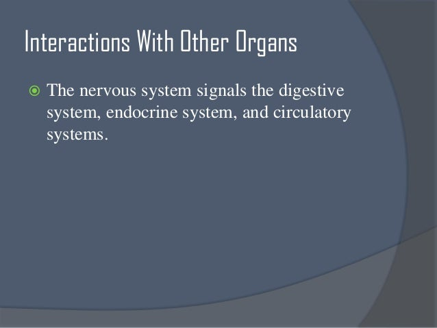 Cd Ee D F Ea C F Central Nervous System Anatomy Peripheral Nervous System besides Apparato Respiratorio likewise  also Image in addition Skeletal System. on 3 major functions of digestive system