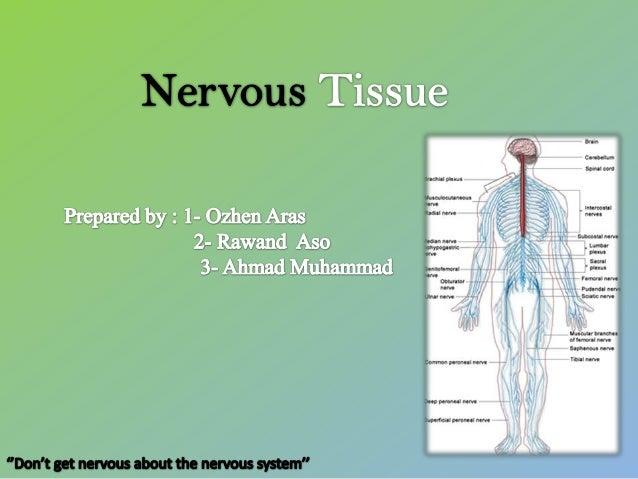 Nervous tissue (Histology)