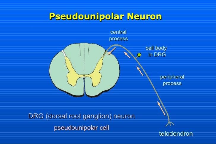 Nervous tissue2k1