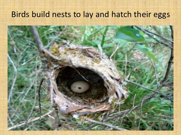 Birds build nests to lay and hatch their eggs