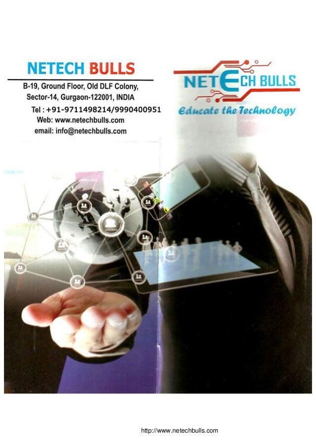 http://www.netechbulls.com