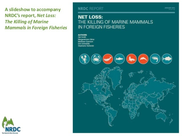A slideshow to accompany NRDC's report, Net Loss: The Killing of Marine Mammals in Foreign Fisheries