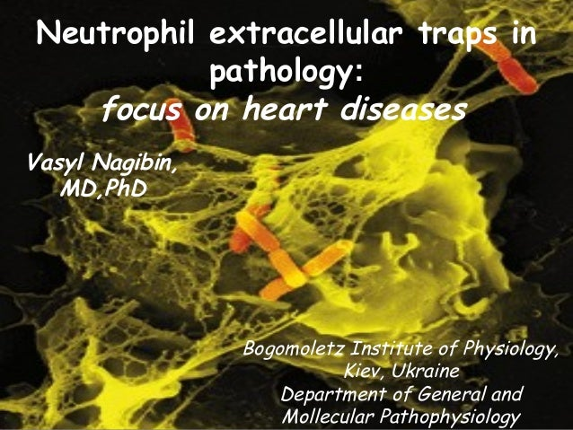 Neutrophil extracellular traps in  pathology:  focus on heart diseases  Bogomoletz Institute of Physiology,  Kiev, Ukraine...
