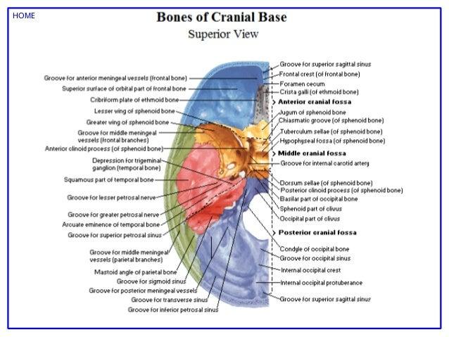 Atlas human anatomy netter