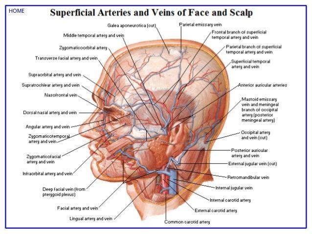 Netter Atlas Human Anatomy Pdf