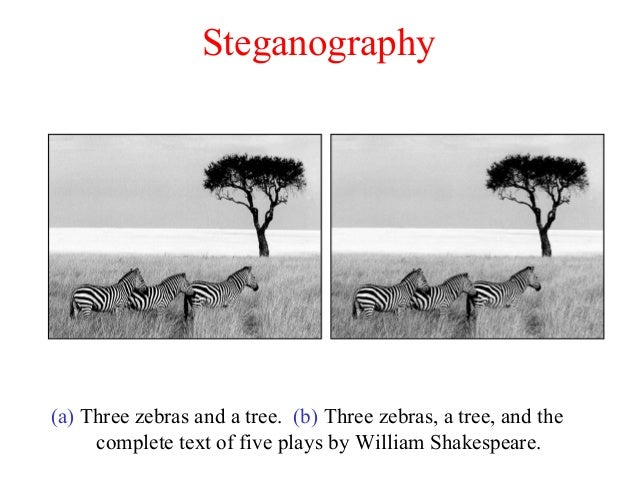 Steganography (a) Three zebras and a tree. (b) Three zebras, a tree, and the complete text of five plays by William Shakes...
