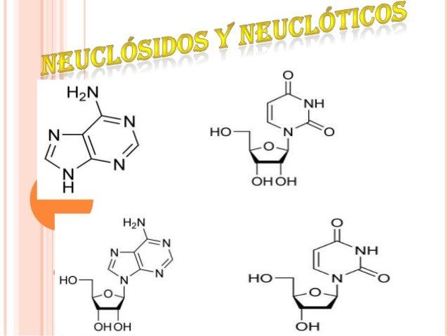  Las unidades que forman los ácidos nucleicos son losnucleótidos. Cada nucleótido es una molécula compuestapor la unión d...