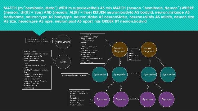 MATCH (m:`hemibrain_Meta`) WITH m.superLevelRois AS rois MATCH (neuron :`hemibrain_Neuron`) WHERE (neuron.`LH(R)`= true) A...