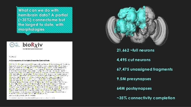What can we do with hemibrain data? A partial (~35%) connectome but the largest to date, with morphologies 21,662 ~full ne...