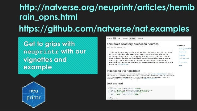 Get to grips with neuprintr with our vignettes and example http://natverse.org/neuprintr/articles/hemib rain_opns.html htt...