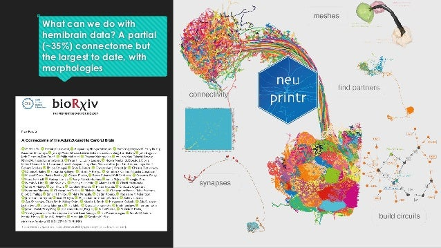 What can we do with hemibrain data? A partial (~35%) connectome but the largest to date, with morphologies