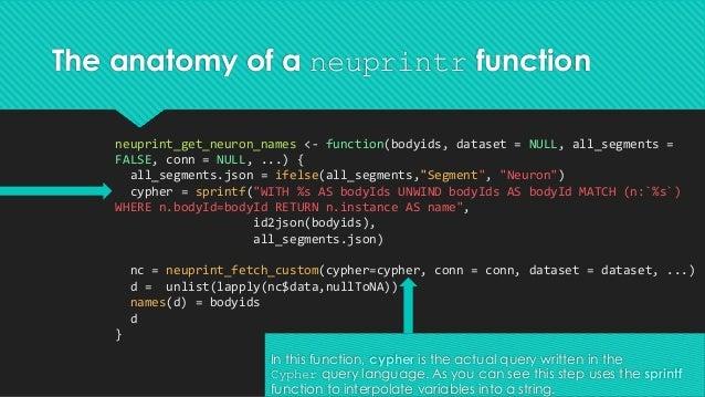 The anatomy of a neuprintr function neuprint_get_neuron_names <- function(bodyids, dataset = NULL, all_segments = FALSE, c...
