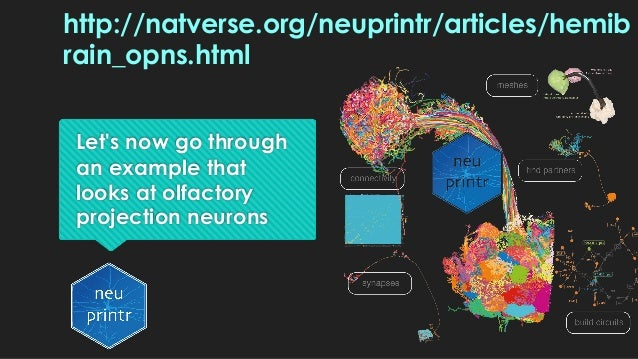 Let's now go through an example that looks at olfactory projection neurons http://natverse.org/neuprintr/articles/hemib ra...