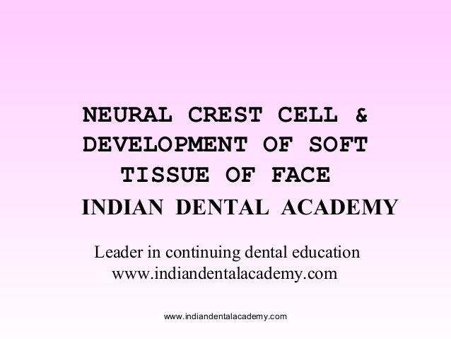 NEURAL CREST CELL & DEVELOPMENT OF SOFT TISSUE OF FACE INDIAN DENTAL ACADEMY Leader in continuing dental education www.ind...