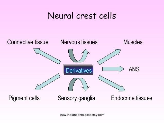 parasympathetic nervous system ganglia