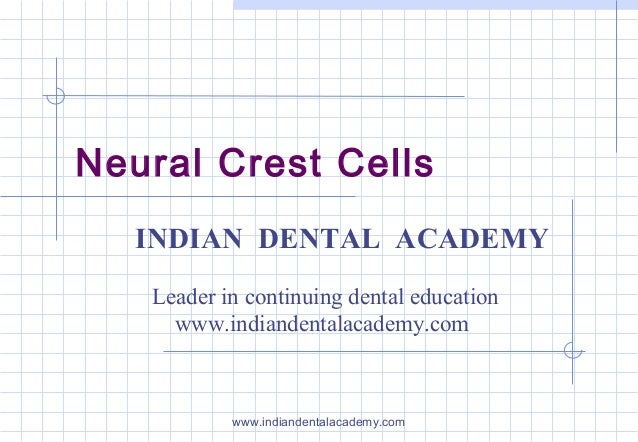 Neural Crest Cells INDIAN DENTAL ACADEMY Leader in continuing dental education www.indiandentalacademy.com  www.indiandent...