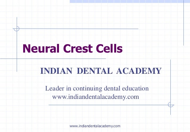 Neural Crest Cells INDIAN DENTAL ACADEMY Leader in continuing dental education www.indiandentalacademy.com www.indiandenta...