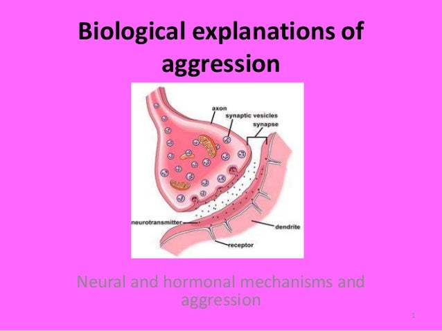 neural and hormonal mechanisms in aggression Discuss the role of neural and hormonal mechanisms in human aggression the relationship between biological mechanisms and aggressive behaviour is a.