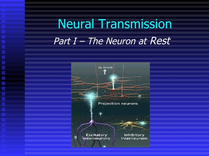 Neural Transmission Part I – The Neuron at  Rest