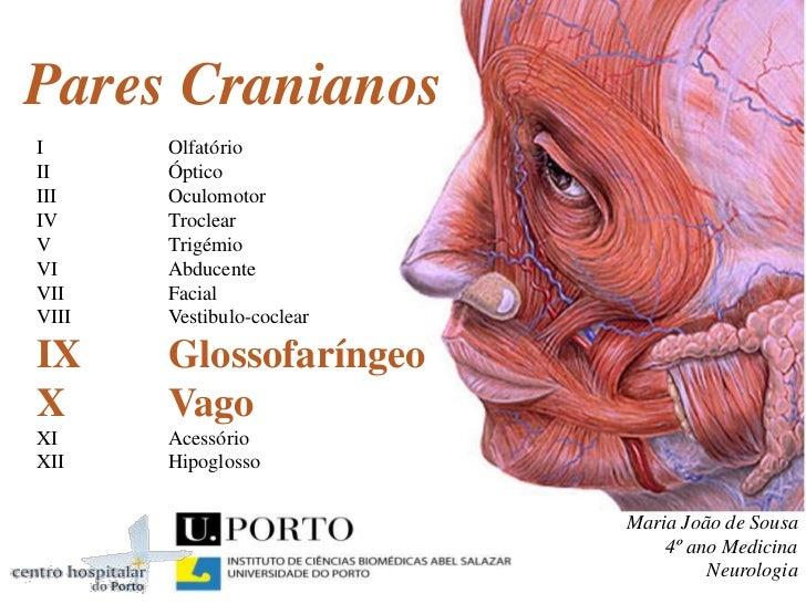 Pares CranianosI      OlfatórioII     ÓpticoIII    OculomotorIV     TroclearV      TrigémioVI     AbducenteVII    FacialVI...
