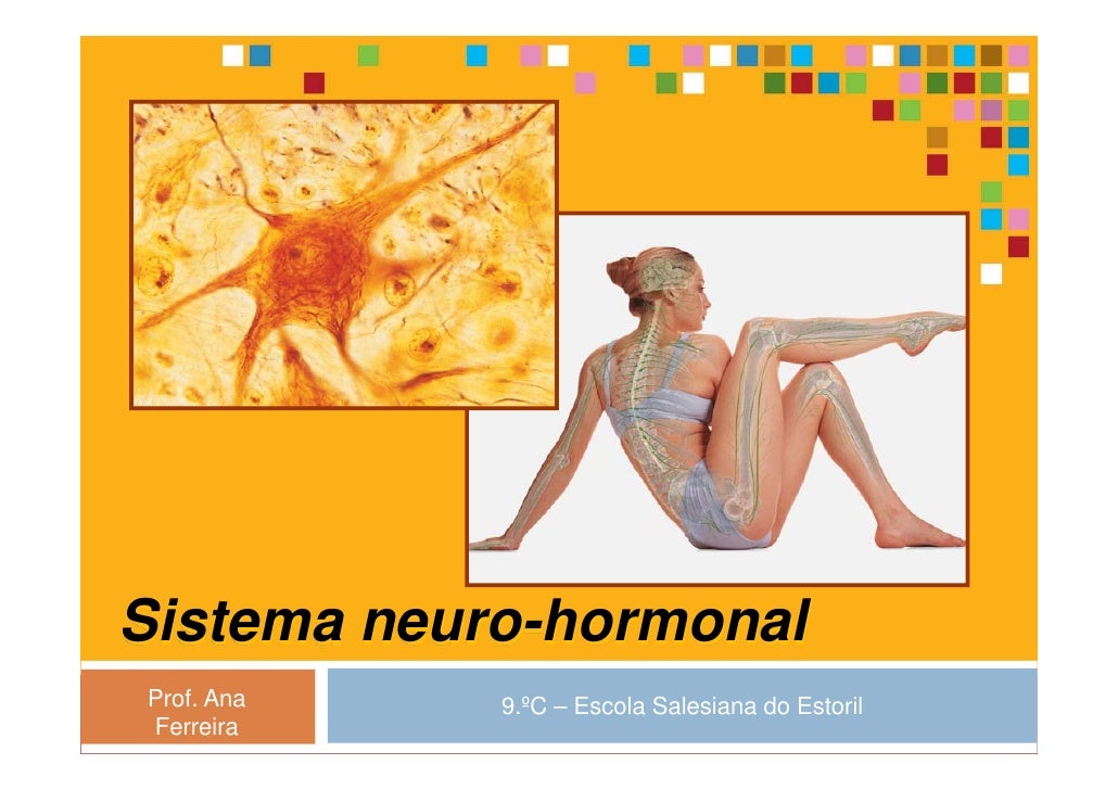 Sistema neuro-hormonal Prof. Ana   9.ºC – Escola Salesiana do Estoril Ferreira