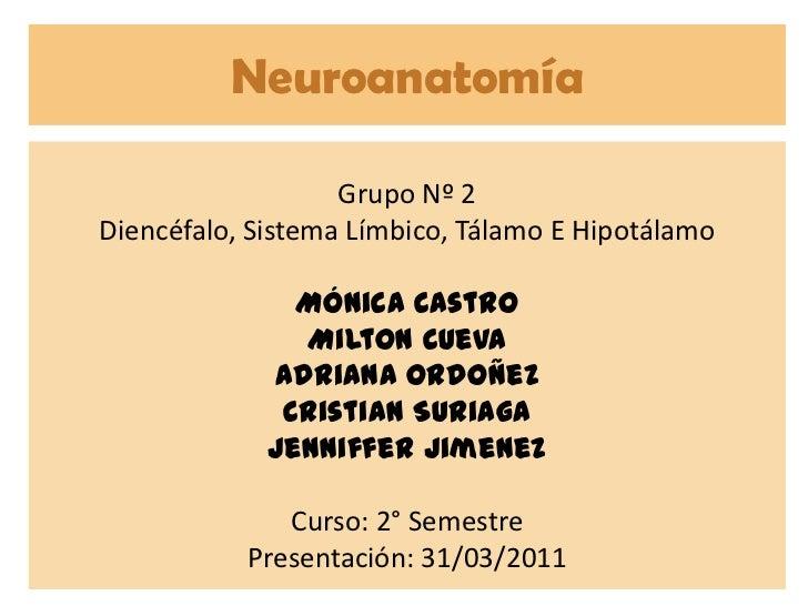 Neuroanatomía<br />Grupo Nº 2<br />Diencéfalo, Sistema Límbico, Tálamo E Hipotálamo<br />Mónica Castro<br />Milton Cueva<b...