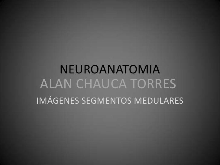 NEUROANATOMIA<br />IMÁGENES SEGMENTOS MEDULARES<br />ALAN CHAUCA TORRES<br />