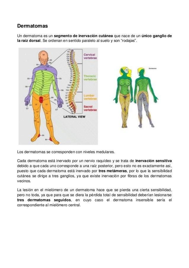 Neuroanatomia 130830192911-phpapp02